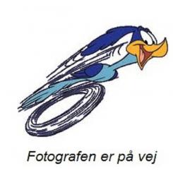 Fugleskaller